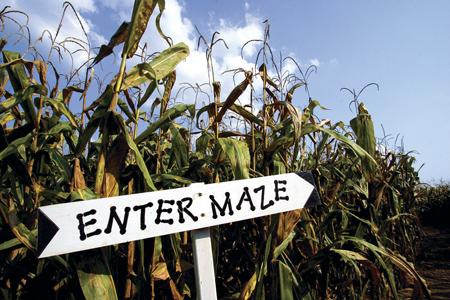 Staheli Corn Maze, St. George, Utah
